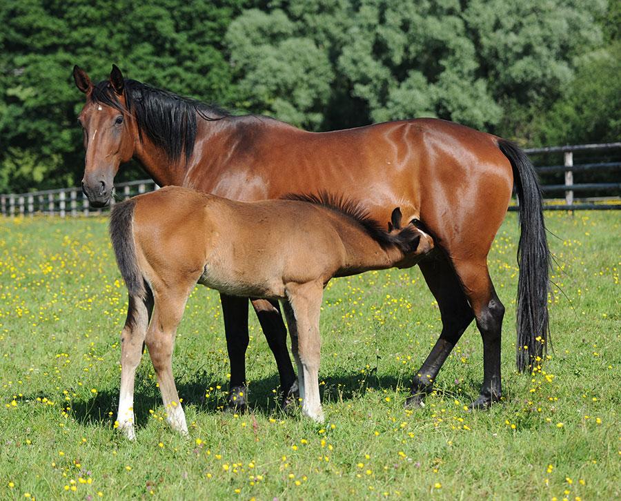 Pouliniere_chevaux-d-elevage