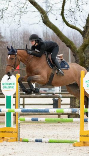 Great Lady Gem - Chevaux sport - Haras de Clarbec