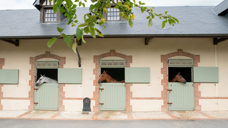 chevaux à vendre - Haras de Clarbec